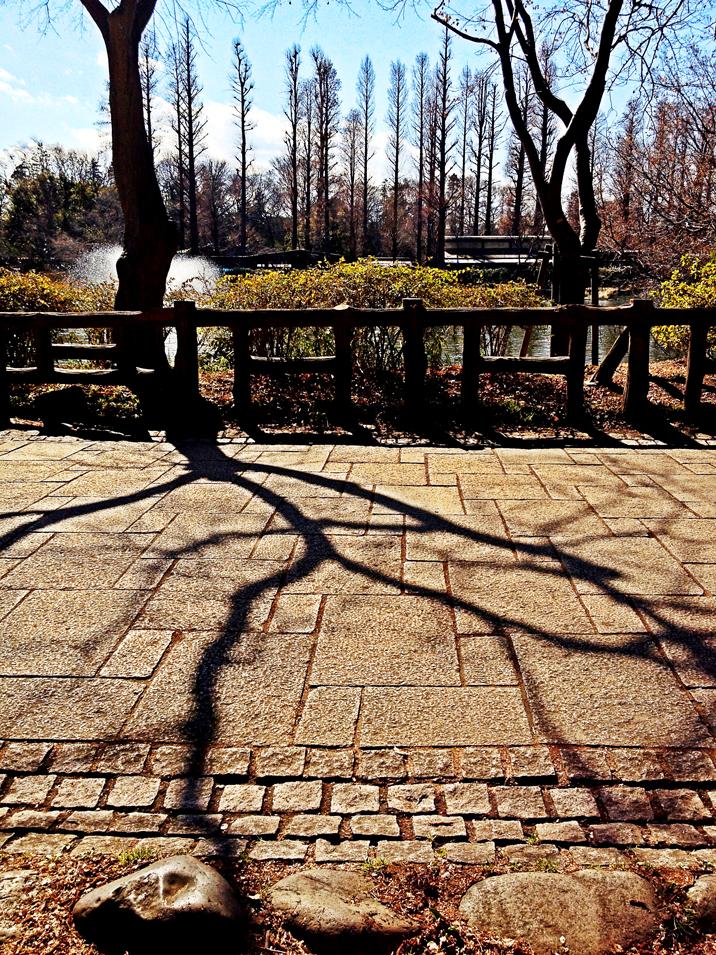 IMG_0531井の頭公園