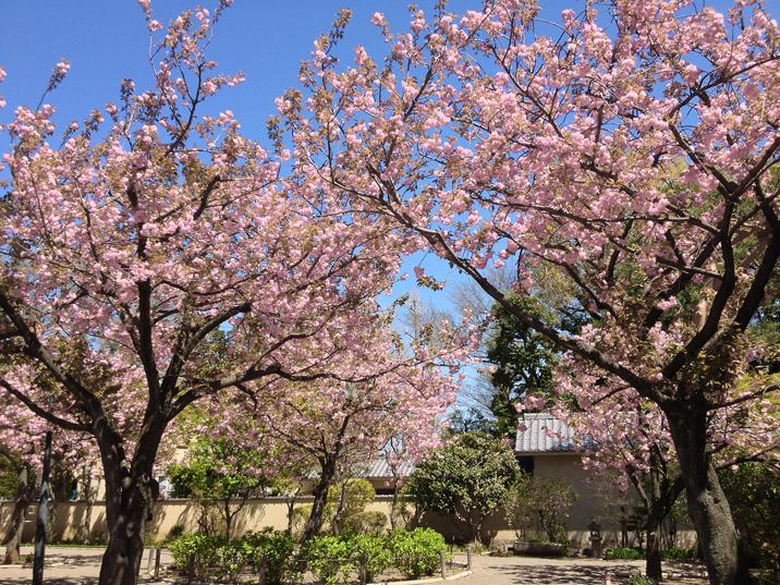 IMG_0566太田黒公園